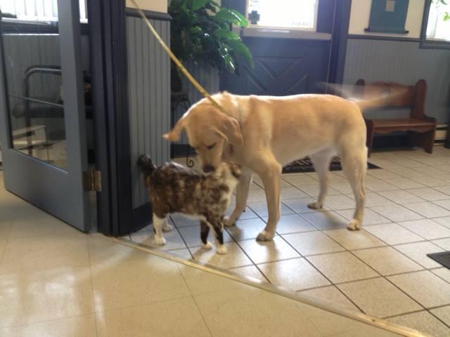 About Us - Atlantic Animal Hospital & Wellness Center